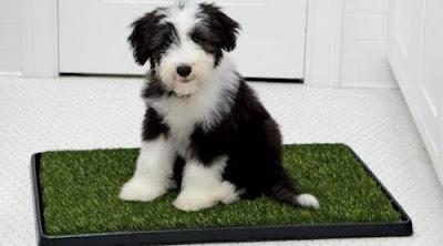 Green Carpet para tu Perro