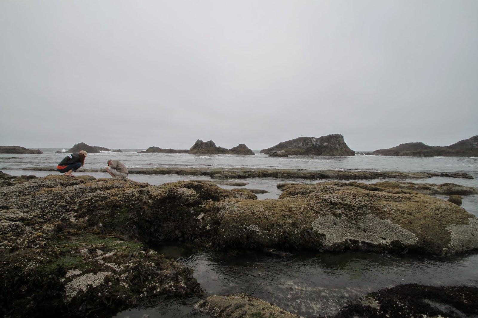 tide pools at Seal Rock