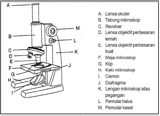 Bagian Bagian Mikroskop Beserta Gambar Dan Fungsinya Terlengkap