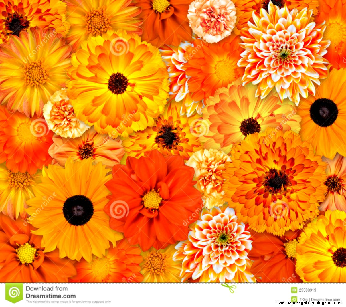 Orange Flower Background Royalty Free Stock Images   Image 25388919