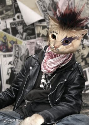 Animals punk Seen On www.coolpicturegallery.us