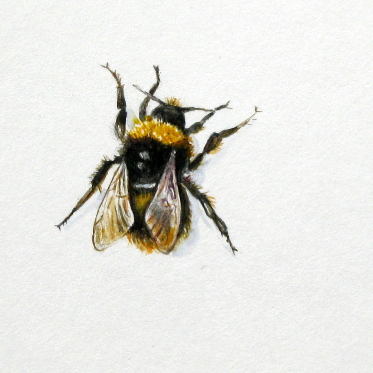 In Spring The New Queen Bees Emerge From Hibernation Each Needs 6000 Flowers A Day To Build Up Enough Energy Reserves Start Hive