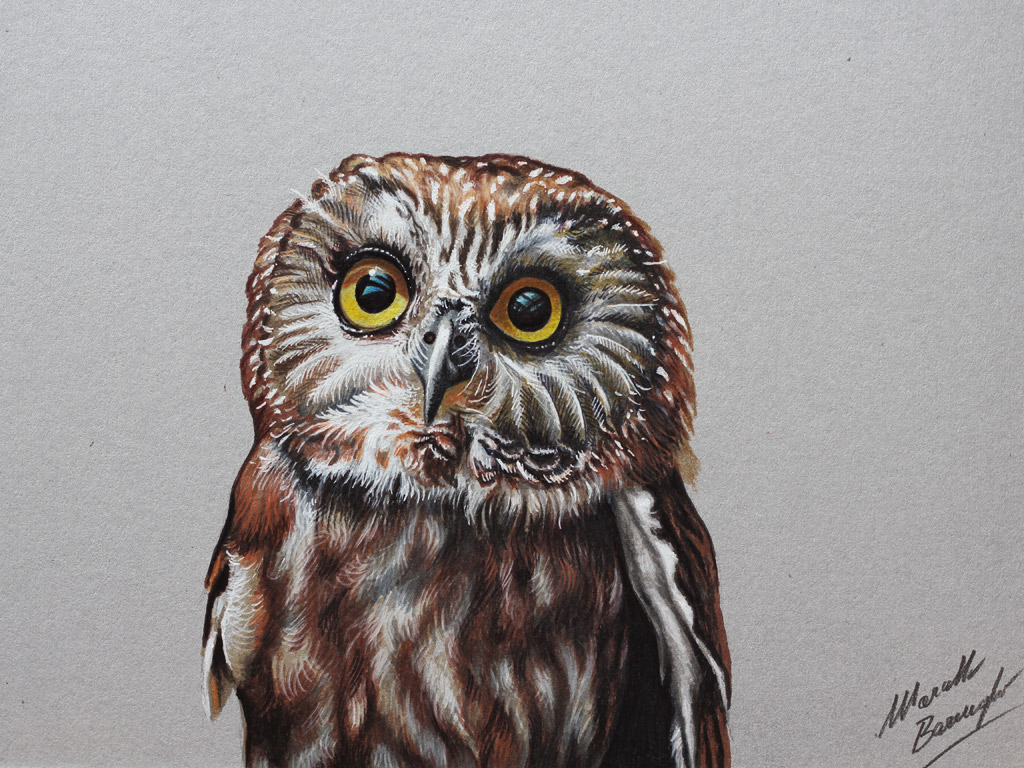 Marcello Barenghi Sito Ufficiale Italiano Settembre 2014 Really Owl Drawings With Color