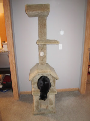 Do it yourself wood shed plans free cat tree plans wooden for Do it yourself cat tower