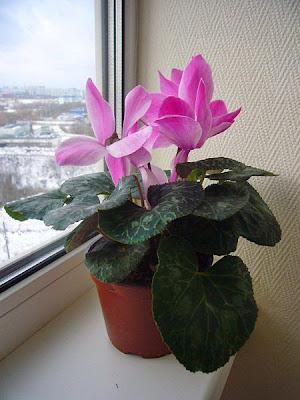 Καλλιέργεια και περιποίηση φυτών στο σπίτι