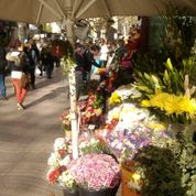 Flowers Sellers, Barcelona