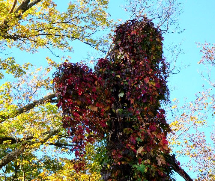 autumn red grape vine - hanging off spooky tree photo