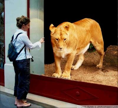 leon Imagenes de animales Divertidos