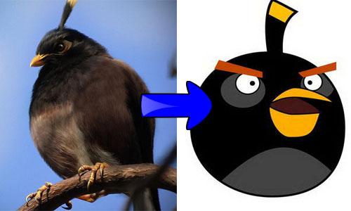 Gambar-Gambar Karakter Angry Bird Dalam Dunia Nyata
