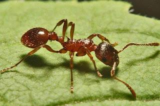 معلومات عن النمل ستعرفها لأول مره فى حياتك !