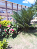 Liceo Vitalina Gallardo