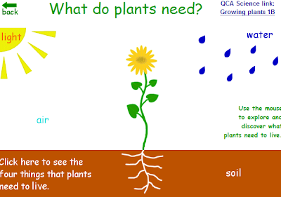Copy Of What Is A Plant? - Lessons - Tes Teach