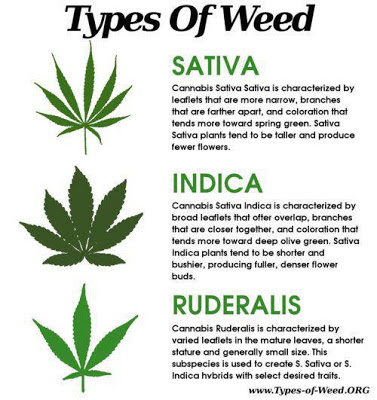 Types Of Weed!!!