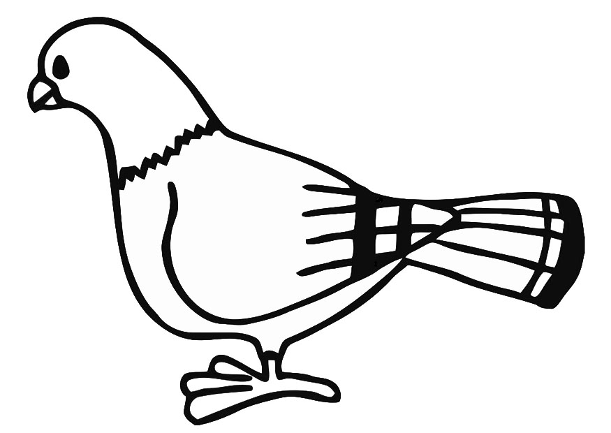 coloring pages pigeon - photo#2