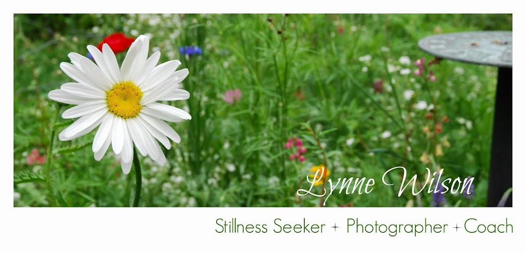 Lynne Wilson: Stillness Seeker : Photographer : Coach