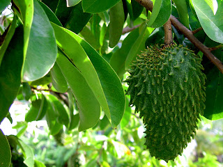 What_is-Soursop