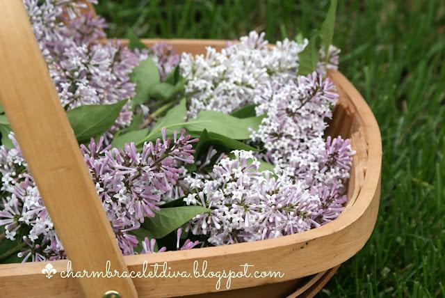 fresh lilacs in flower trug