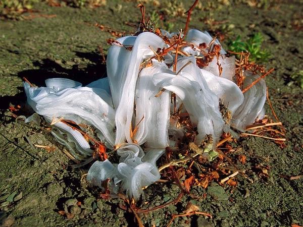 http://jasadh.blogspot.com/2015/01/fenomena-bunga-es-frost-flowers.html