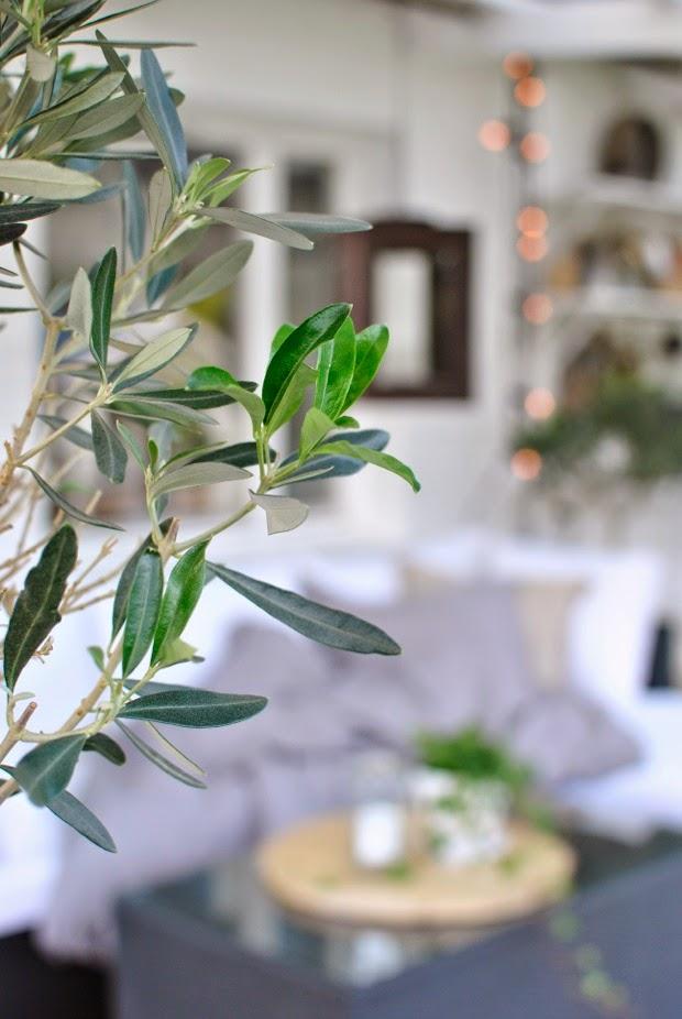 hannashantverk olivträd
