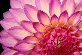"Dahlia:- ""Inner Strength, Creativity and Standing Strong"""