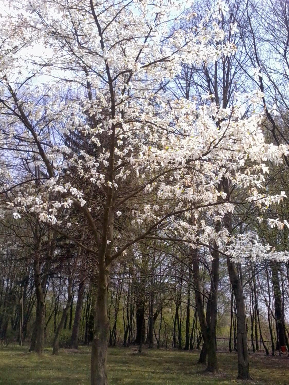 wiosna Skaldowie