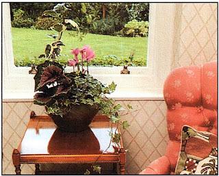 Посадите в миску несколько растений, чтобы создать декоративную группу; здесь использованы Begonia rex (Бегония королевская), цикламен и плющ