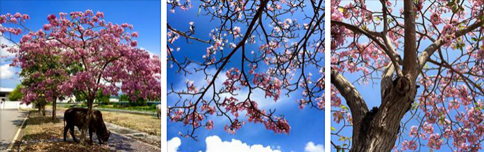 Musim Bunga Telah Bermula Di Kawasan Utara