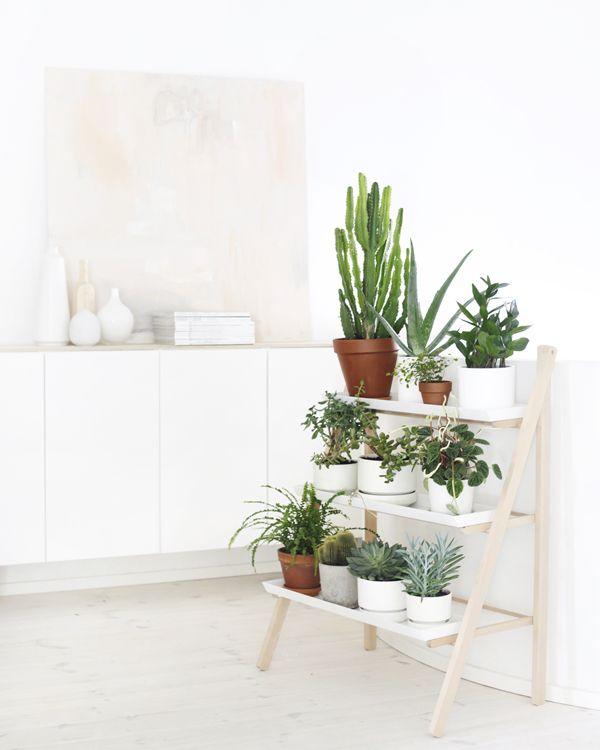 las 5 mejores ideas para tener plantas en casa la 25 best ideas about house plants on pinterest plant
