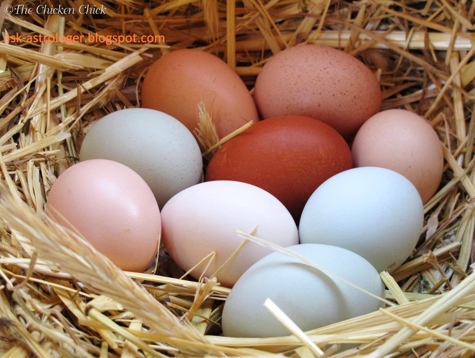 Why eggs are in different shapes?