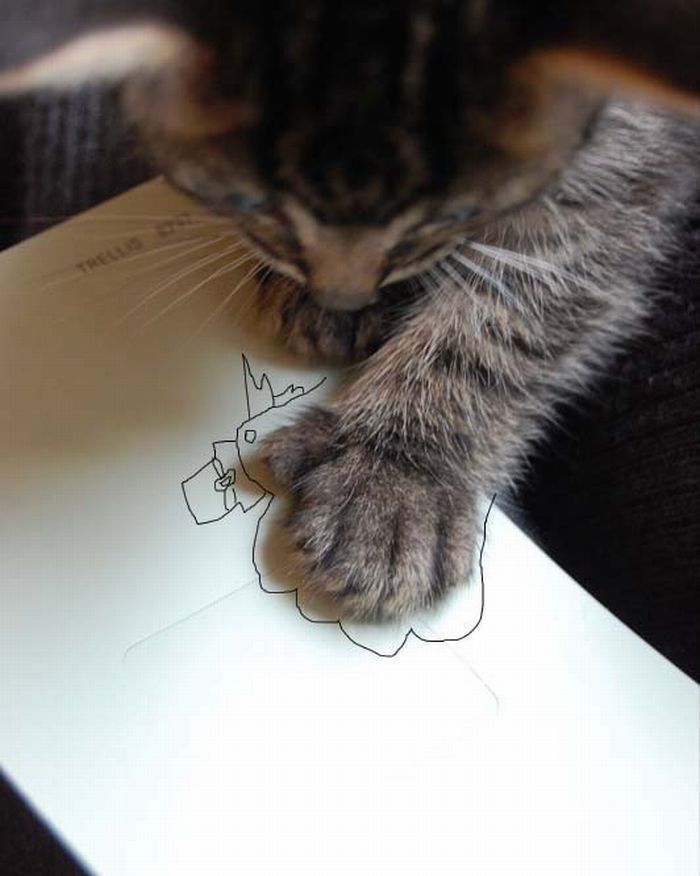 funny cat pictures, paw drawing