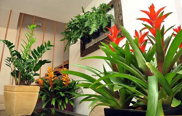 Plantas para decorar apartamentos verde em folha for Plantas para dentro de casa sombra