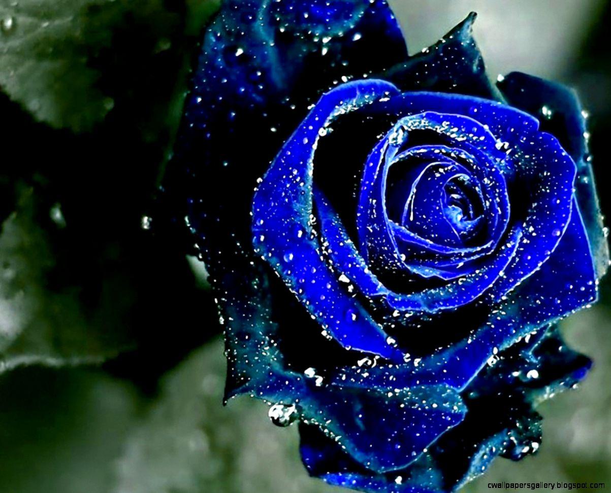 beautiful blue flowers pictures hd desktop 9 1280×1024