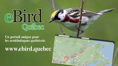 Consultez eBird Québec