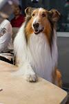 Lassie at Ryan Seacrest's studio