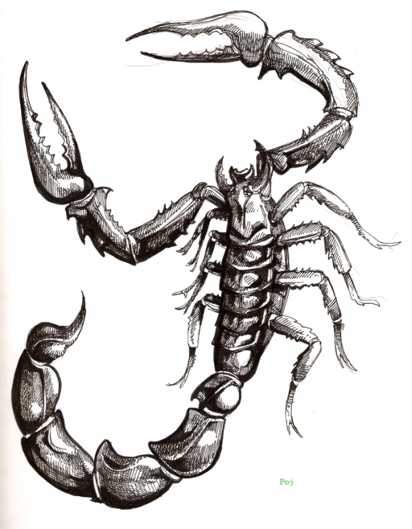 Scorpion+tattoo+photos+images+pictures+shoulder+(53)jpg