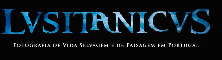 Lusitanicus > Luis Quinta
