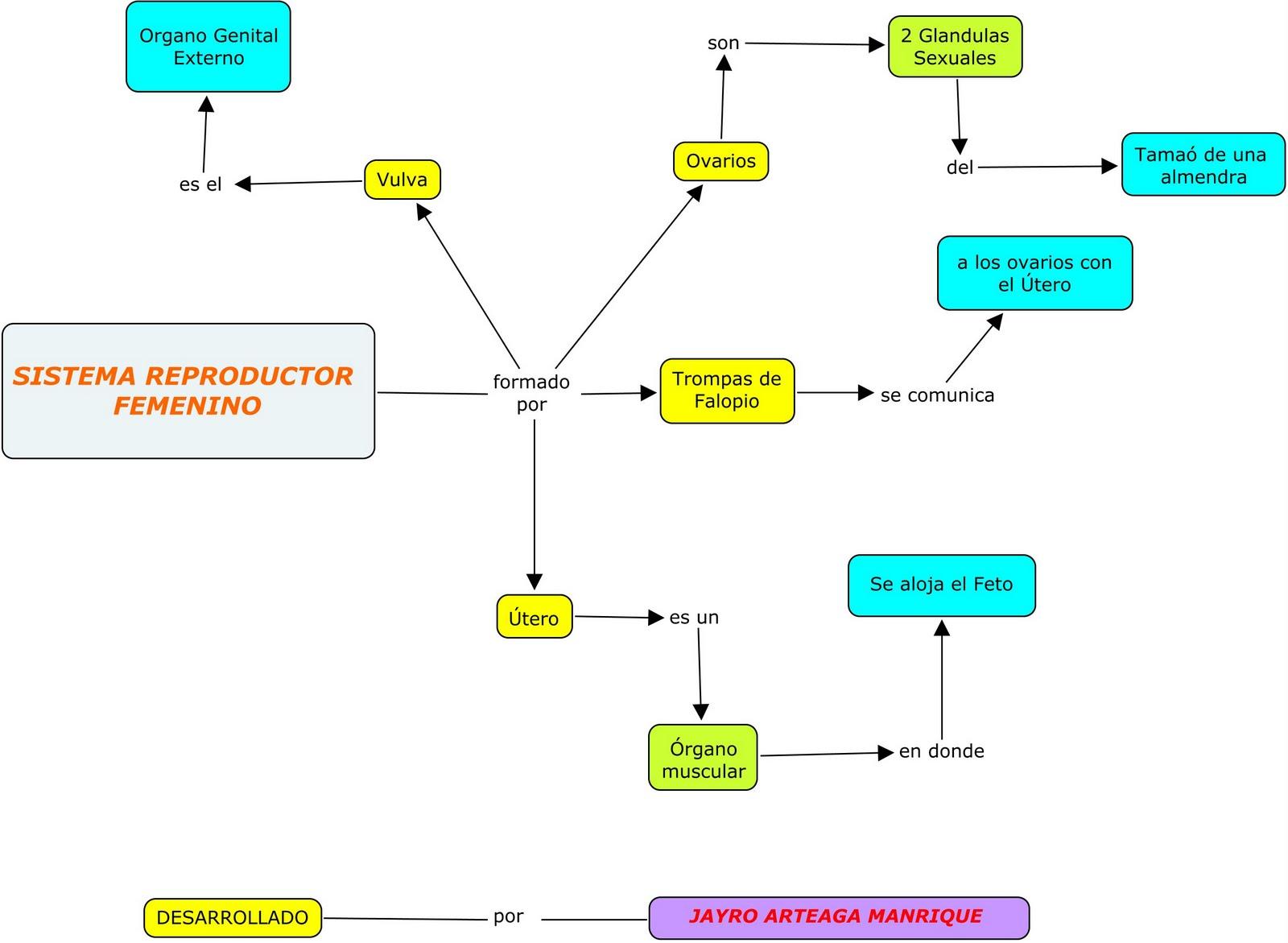 Bonito Cuadro Femenino Sistema Reproductivo Etiquetado Imágenes ...