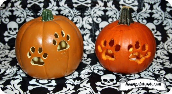 Paw Print Carvable Pumpkin Fall Decoration