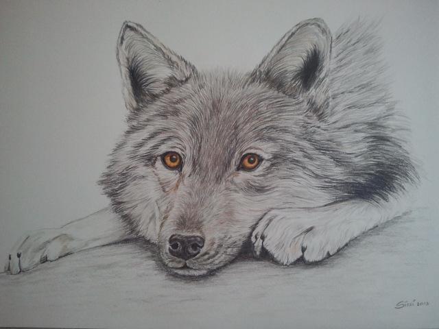 I disegni anima ti lupi for Lupo disegno a matita