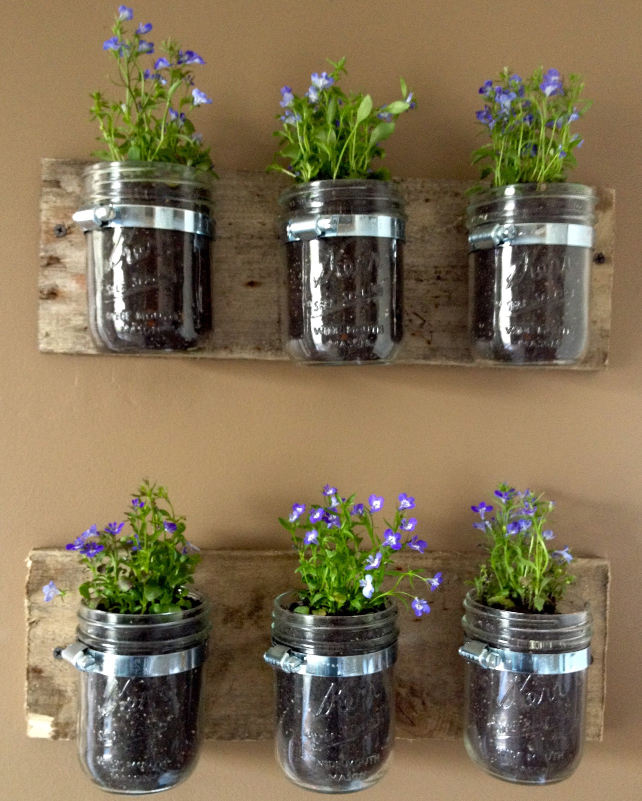 diy hanging wall planters from mason jars kasey trenum. Black Bedroom Furniture Sets. Home Design Ideas