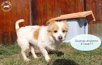 canina piccola taglia adozione