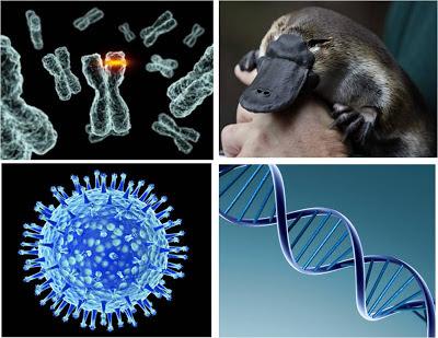 Mutacion y evolucion
