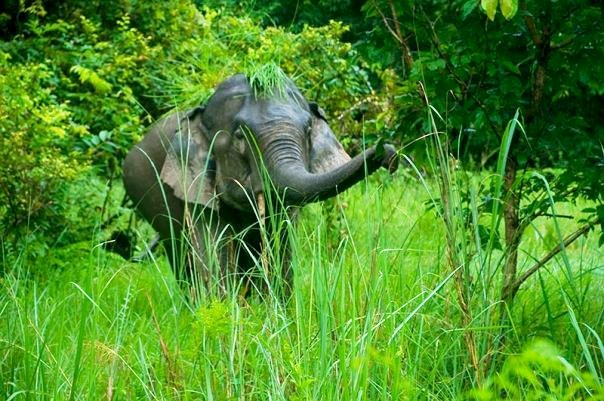 An elephant at Kaziranga National Park (photo - Nassif Ahmed)