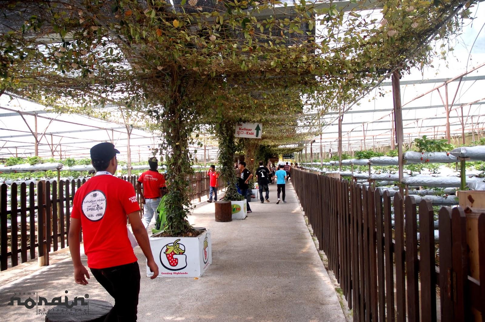 Genting Strawberry Leisure Farm Ladang Strawberi Terbesar Di Malaysia