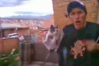 lanza a un gato al vacio gato volador