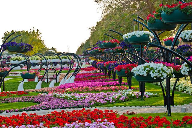من اجمل حدائق العالم : حديقة العين بارادايس من الإمارات العربية DSC_4675.jpg