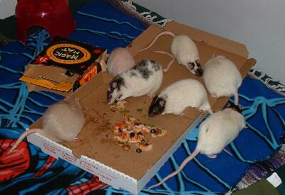 Pizza congelada microondas