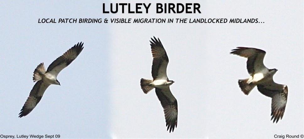 Lutley Birder