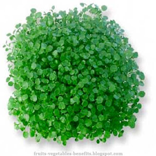 benefits_of_eating_watercress_fruits-vegetables-benefits.blogspot.com(13)