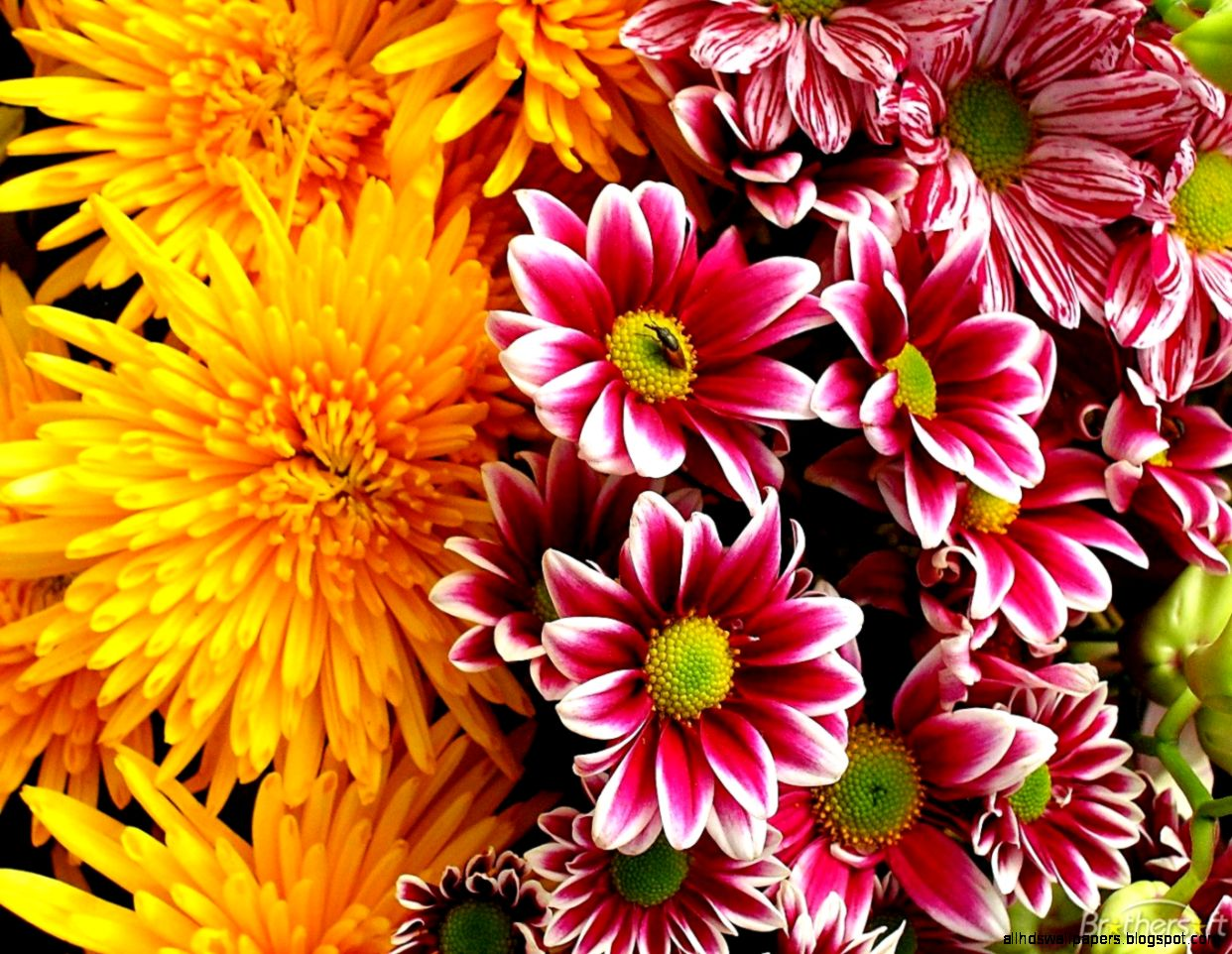 Download Free PlayColors Flowers Screensaver PlayColors Flowers